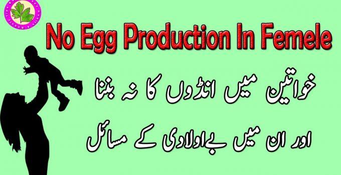 No Egg Production In Female - Aurton Main Egg Maturity Ka Tarika